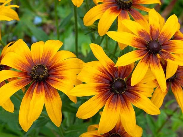 Una planta de jardinería que se desarrolla en los meses de otoño e