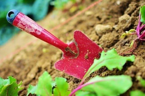 servicio de abono para jardines