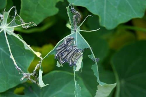 servicio de control de plagas para jardines