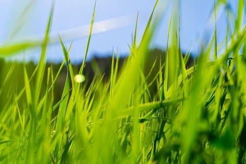 erradicación de la hierba mala
